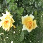 176kwiaty