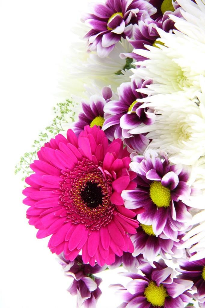 kwiaty194